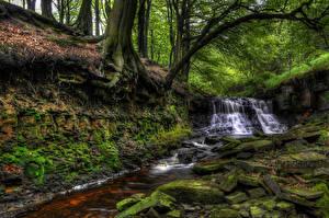 Фотографии Англия Водопады Камень Мох Деревья Roddlesworth Woods Природа