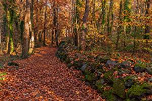 Картинки Леса Осень Камни Деревья Листья Мох Природа