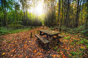 Обои для рабочего стола Лес Осенние Дерево Лист Стола Скамья Природа