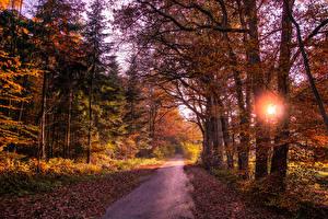 Фотография Леса Дороги Осенние Деревья Листва