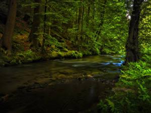 Фото Леса Деревья Ручей Мох