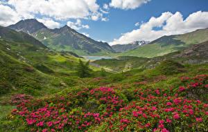 Фотография Франция Пейзаж Горы Рододендрон Холмы Savoie Природа