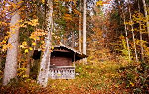 Фото Германия Осенние Леса Бавария Деревья Листва Grainau Природа