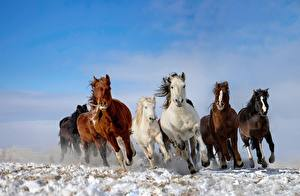 Фотография Лошади Бег Животные