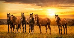 Фото Лошади Рассветы и закаты Животные