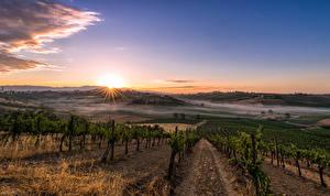 Фотографии Италия Тоскана Пейзаж Поля Рассветы и закаты Виноградник Кустов Природа