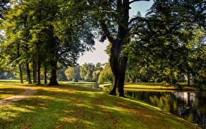 Картинки Нидерланды Парки Речка Осенние Деревья Reeburgpark Природа