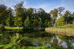 Обои Нидерланды Пруд Деревья s' Graaveland Природа