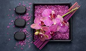 Фото Орхидеи Камень Соль Цветы