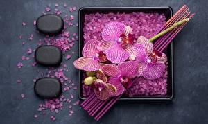 Фото Орхидея Камни Соль Цветы