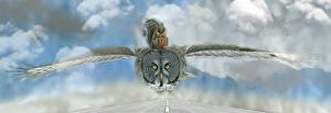 Картинки Совы Птицы Белки Летящий Чемодан Животные