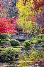 Фотография Парки Осенние Пруд Кусты Природа