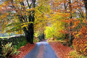 Картинка Парки Осень Дороги Деревья Листва