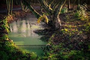 Фото Парки Пруд Осенние Ствол дерева