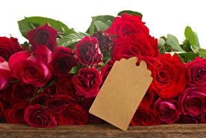 Обои Розы Вблизи Красный Шаблон поздравительной открытки Цветы