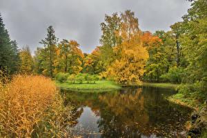Фотография Россия Санкт-Петербург Парки Осень Пруд Деревья Pushkin Природа
