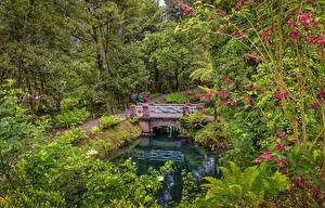 Обои Испания Парки Пруд Мосты Деревья Gijon Asturias Природа