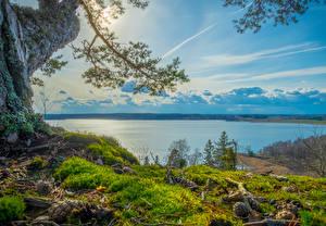 Обои Швеция Реки Побережье Небо Шишки Мох Grodinge Природа картинки