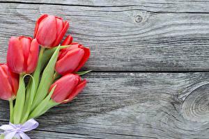 Картинка Тюльпаны Доски Красный Цветы