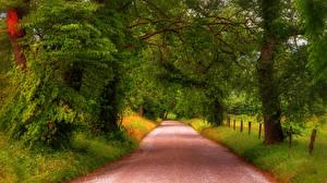 Фотография США Парки Дороги Деревья Трава Great Smoky Mountains National Park