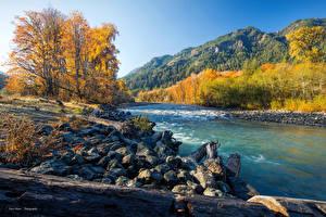 Фотография Штаты Речка Осенние Камень Леса Elwha River Olympic National Park