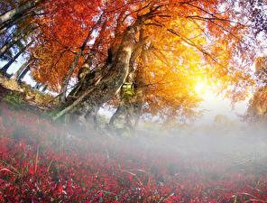 Фотографии Украина Осень Закарпатье Деревья Туман Природа