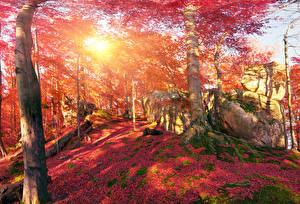 Фото Украина Леса Осенние Камень Закарпатье Деревья Листва Мох