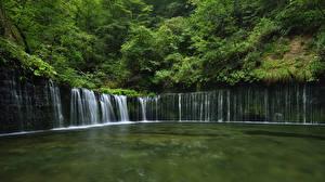 Обои Водопады Кусты Природа картинки