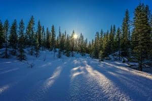 Фото Зимние Снег Ель Природа