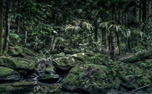 Обои Австралия Леса Камень HDR Мох Пальмы Strickland State Forest