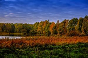 Фото Осень Лес Озеро Трава Природа