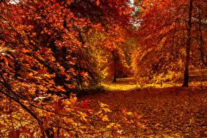 Картинки Осень Леса Деревья Листва