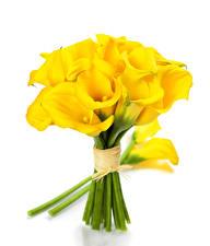 Обои Букеты Каллы Белый фон Желтый Цветы