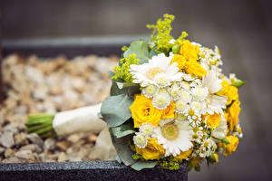 Фотография Букет Роза Гербера Хризантемы цветок