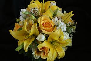 Картинки Букет Роза Лилии Альстрёмерия На черном фоне Желтый цветок