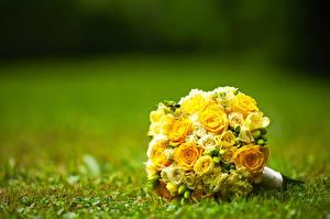 Фото Букеты Розы Желтая Цветы