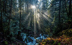 Картинки Канада Парки Леса Лучи света Деревья Vancouver Island National Parks Природа