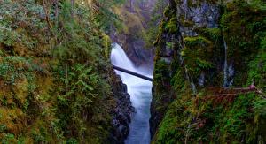 Фото Канада Водопады Ванкувер Утес Мох Каньон Little Qualicum Falls Природа