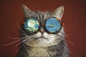 Обои Коты Рисованные Усы Вибриссы Очки Луна Животные