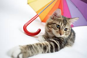 Обои Коты Лапы Зонт Смотрит