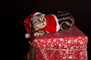 Фотография Рождество Коты Черный фон Униформа Животные
