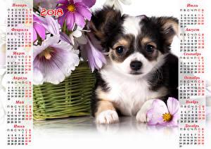 Обои Рождество Собаки Календарь 2018 Щенок Чихуахуа Животные