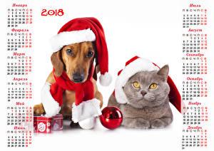 Картинка Новый год Собаки Коты Календарь Белый фон 2018 Шапки Такса Шарики Животные