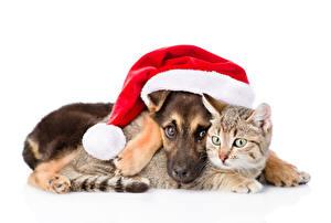 Картинка Рождество Собаки Коты Белый фон 2 Шапки Щенок