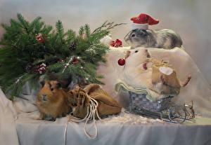 Картинка Рождество Морские свинки Ветвь Санки Подарки Шапки Животные