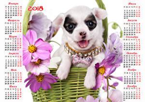 Обои Собаки Космея Украшения Календарь 2018 Чихуахуа Русские Животные