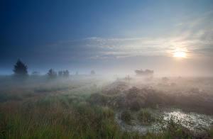 Фотография Поля Утро Туман Трава