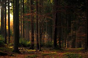 Обои Леса Осенние Деревья Листва