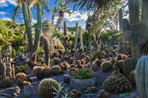 Картинка Италия Сады Кактусы Много Ischia island Природа