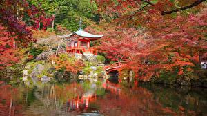 Фото Япония Киото Парки Пруд Осень Пагоды Кусты